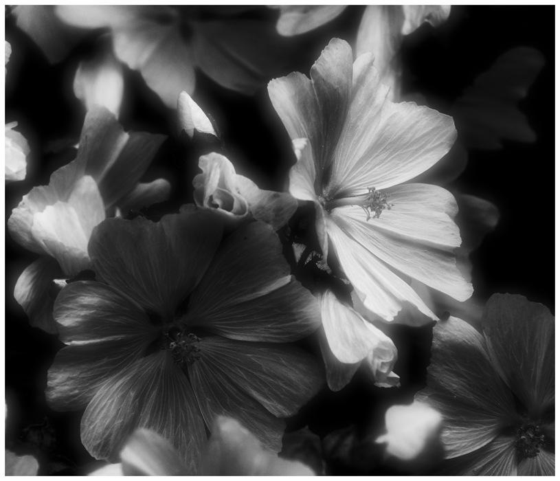 photoblog image flower 5/948