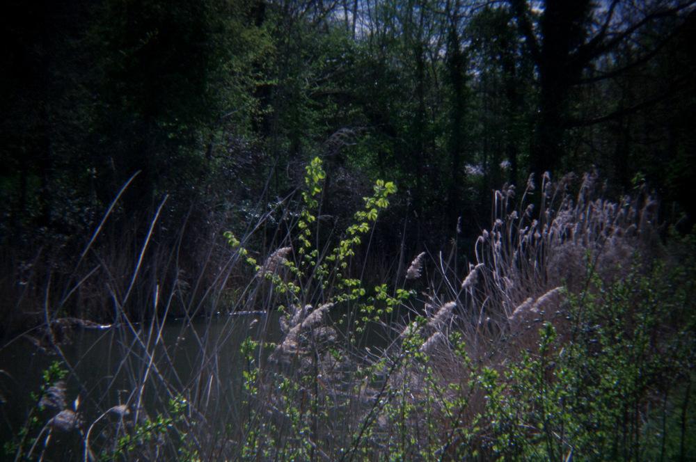 photoblog image Holga4
