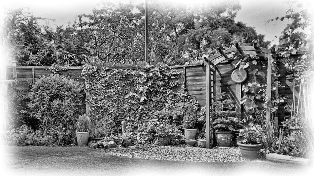 photoblog image Back Garden