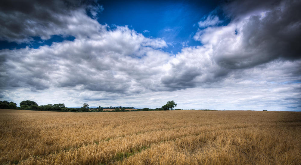 photoblog image A Walk in the worcestershire Countryside 6