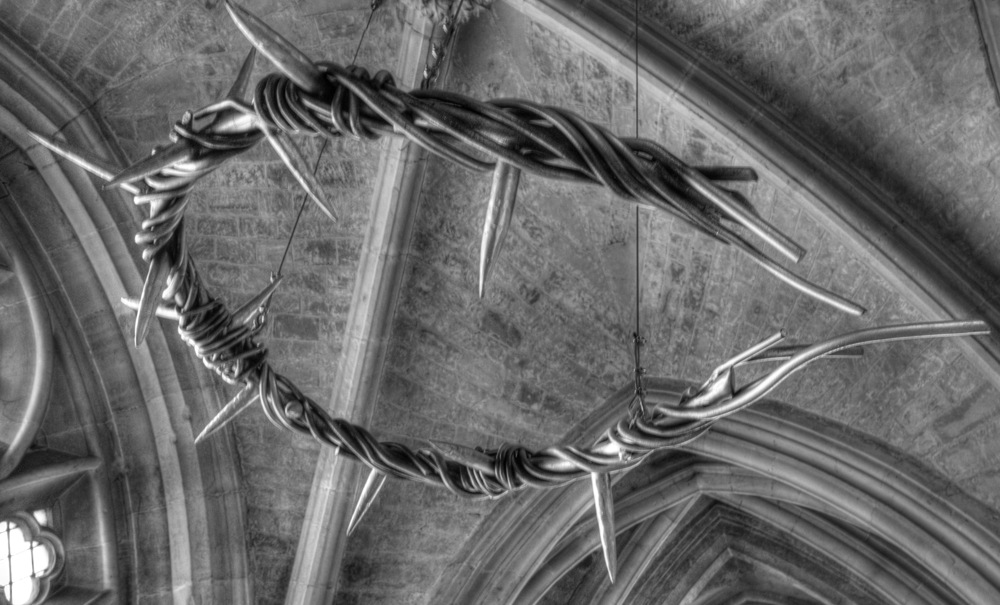 photoblog image Crown of thorns