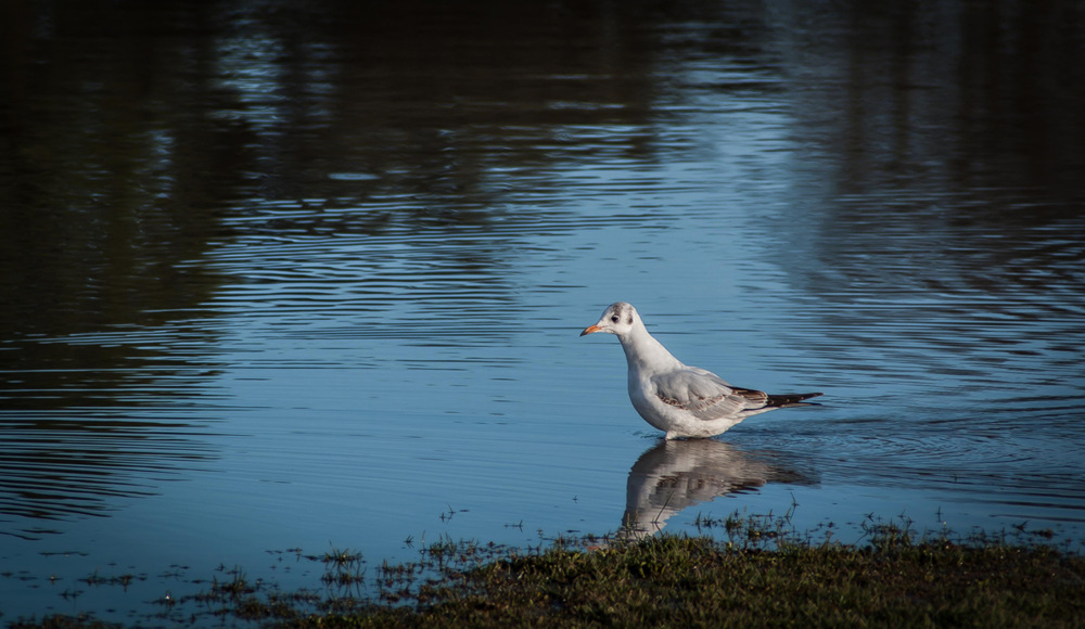 photoblog image Bird having a paddle