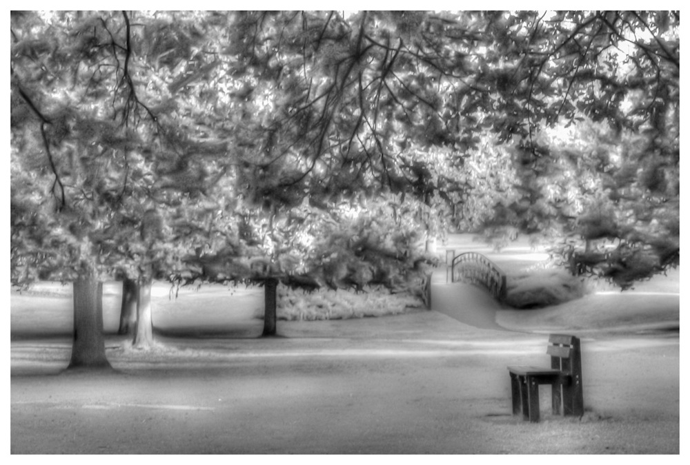 photoblog image A walk in the park
