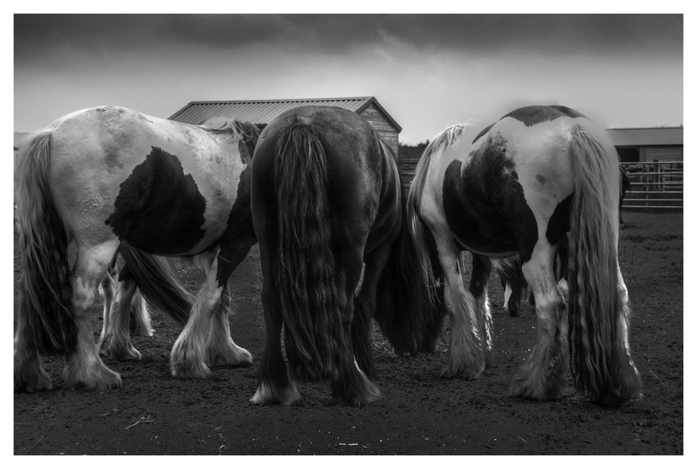 photoblog image Horses rear view 1