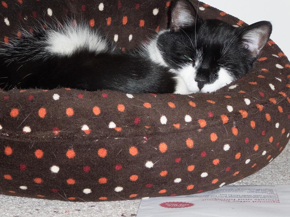 photoblog image Oscar