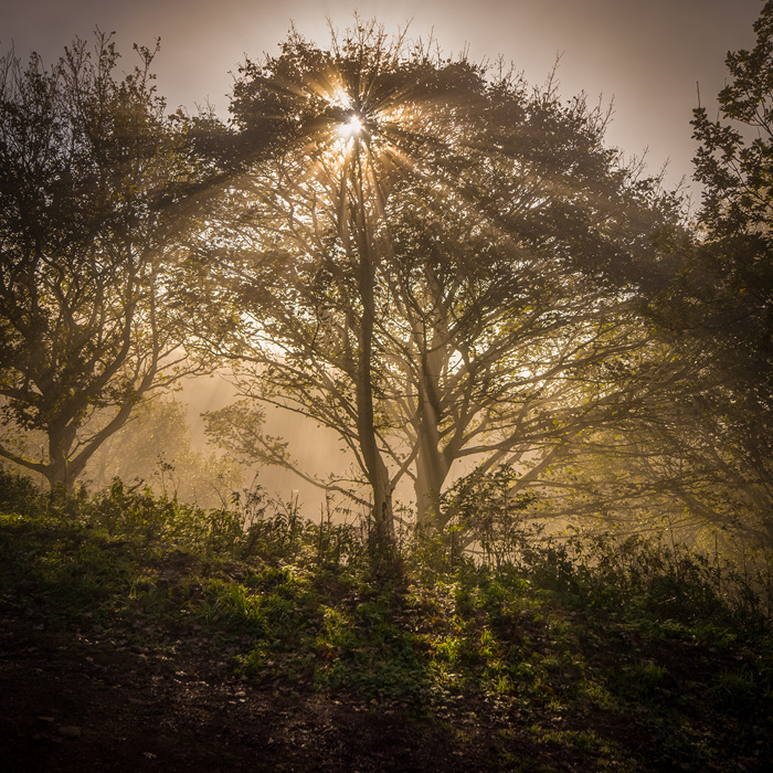 photoblog image The Clent Hills revisited 5