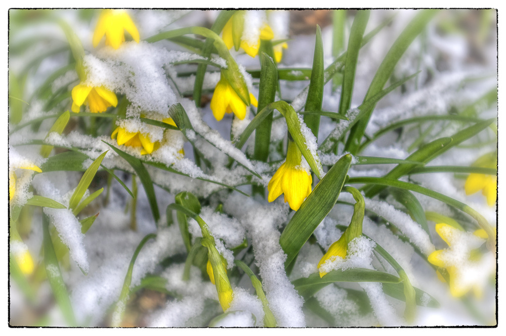 photoblog image Spring V Winter