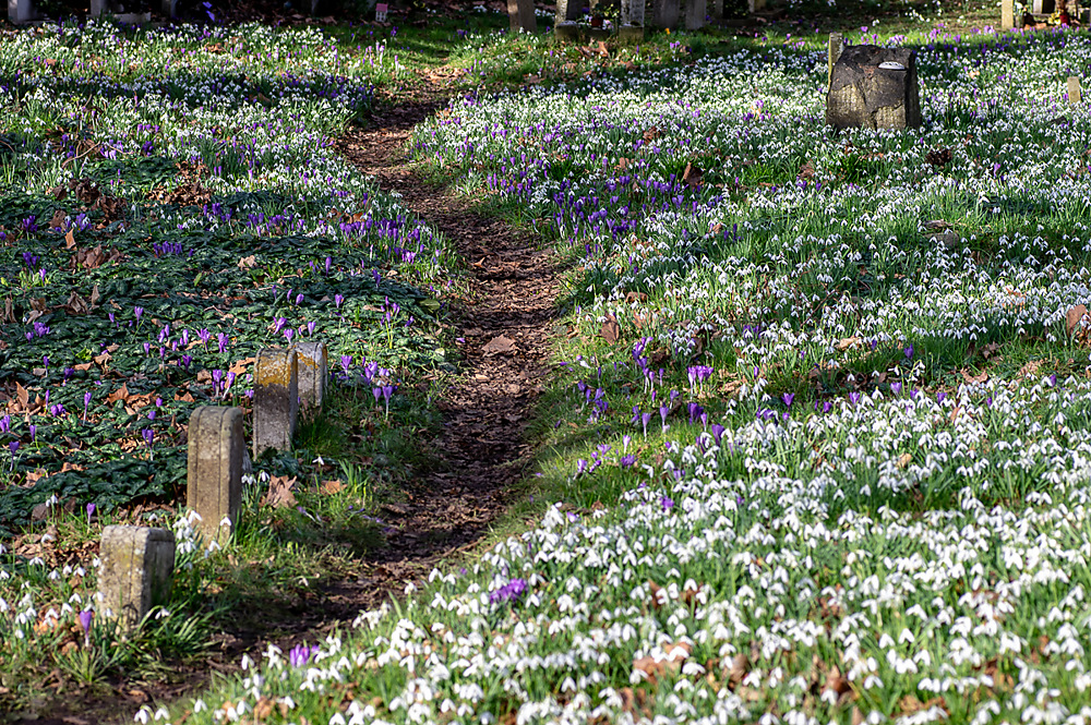 photoblog image Snowdrops and crocuses